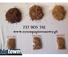 Tytoń, Sprawdź, Okazja 79 zł 1 kg